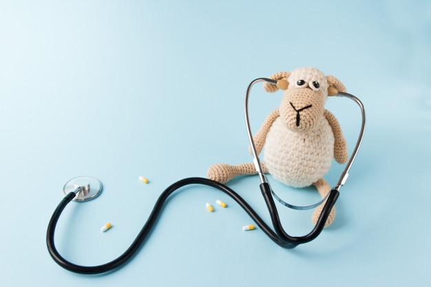 Zdjęcie pluszowej owcy ze stetoskopem w przychodni